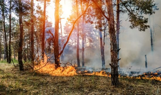 Wildfires Impact Interval Funds : A 2019 Q1 Update
